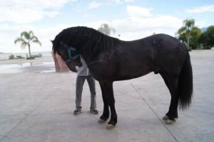 caballo 5