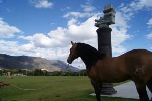 caballo 6