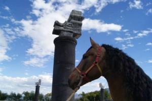 caballo 7